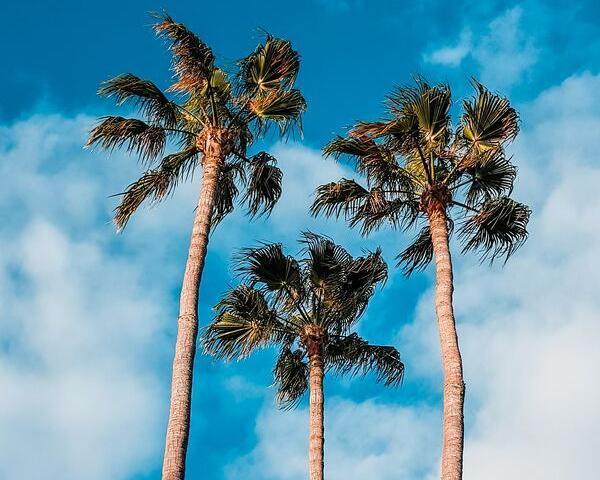 Viaje combinado por las islas Canarias - 8 días
