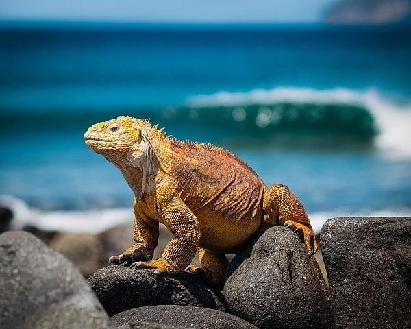Visita a las Islas Galapagos con parada en Quito, Ecuador