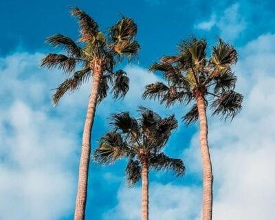 Viaja a Gran Canaria en Fin de Año