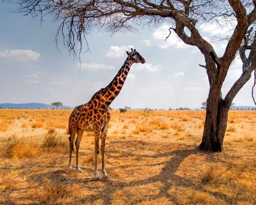 Viaje a Nairobi, Kenia