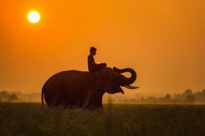 Animales Asia Camboya