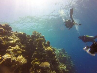 Arrecife Buceo Palau