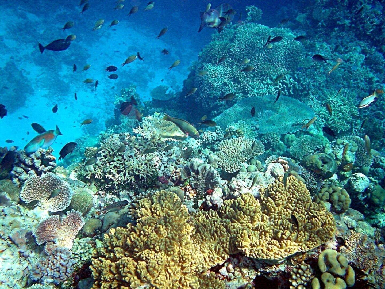 Arrecifes de coral en aguas cristalinas Papúa Nueva Guinea