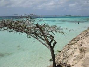 Aruba árbol Playa