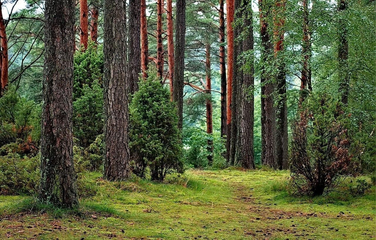 Bosque Bosques Tucholski Polonia