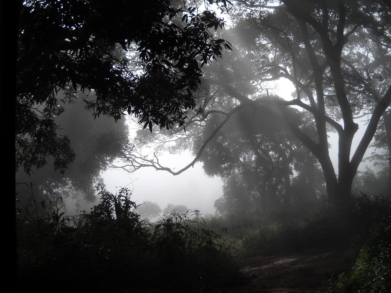 Bosques Niebla Guinea