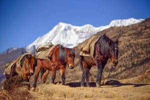 Bután Montaña Caballo