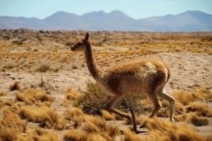 Chile Desierto De Atacama Sur