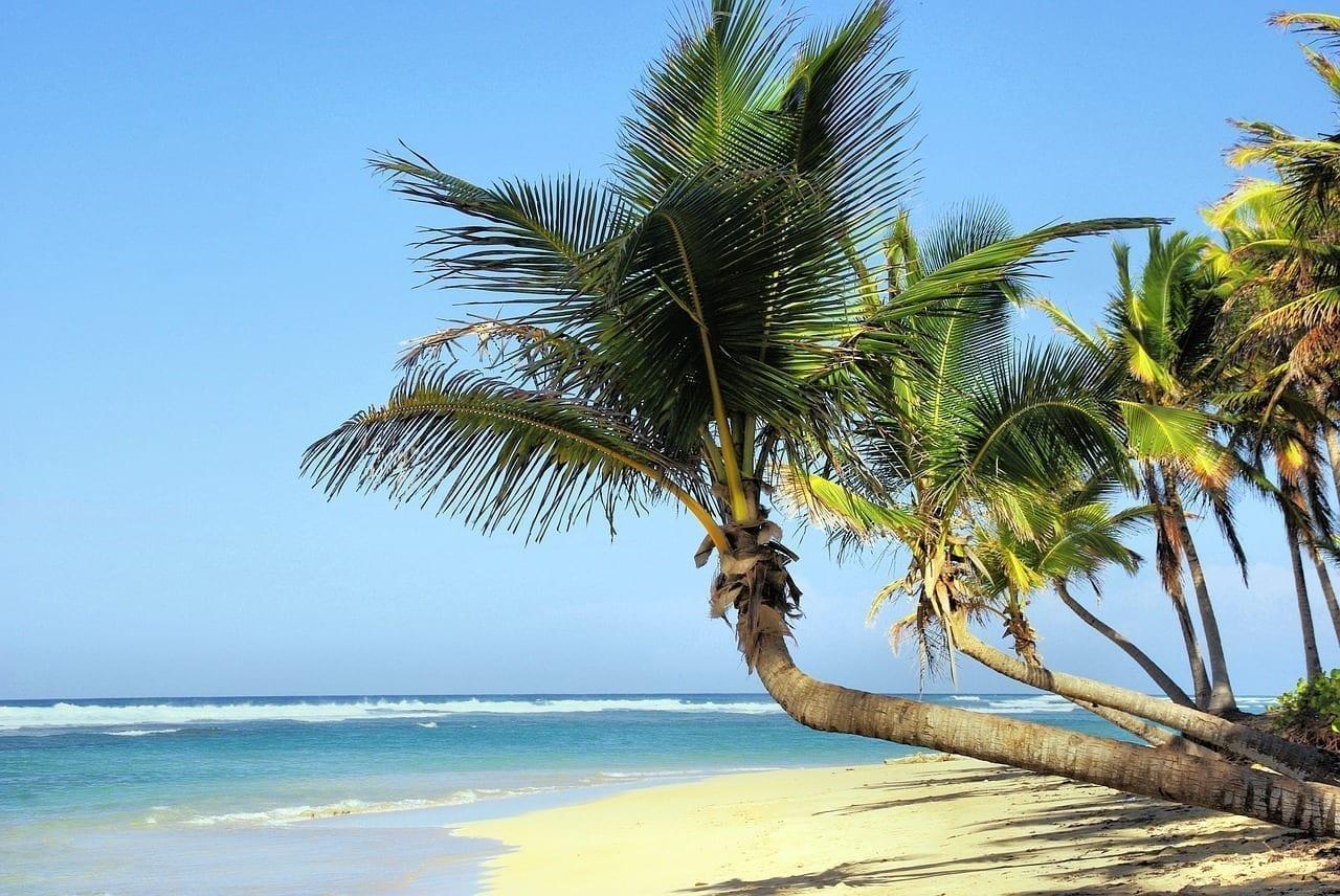 Cuba Playa árboles De Coco