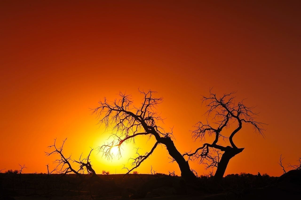 Dentro De Mongolia árbol Extraño