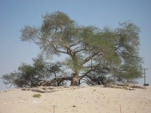 El árbol de la vida Bahrein