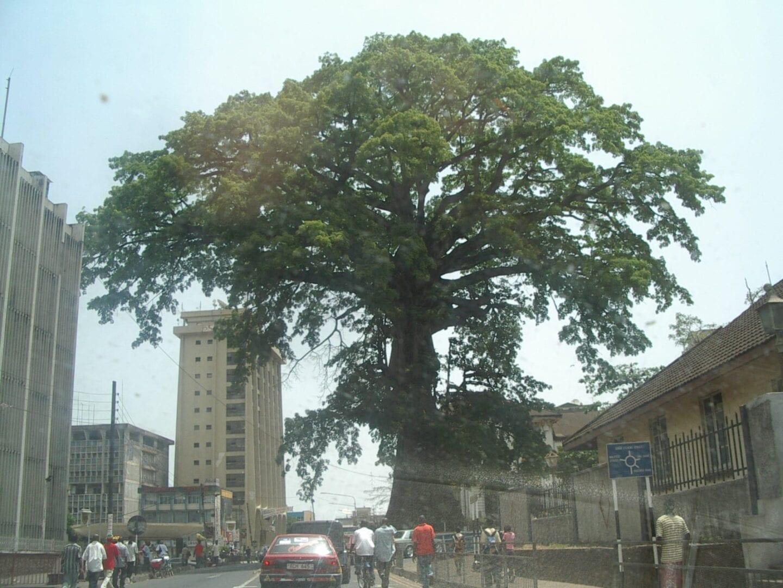 El histórico árbol de algodón en el centro de Freetown Sierra Leone