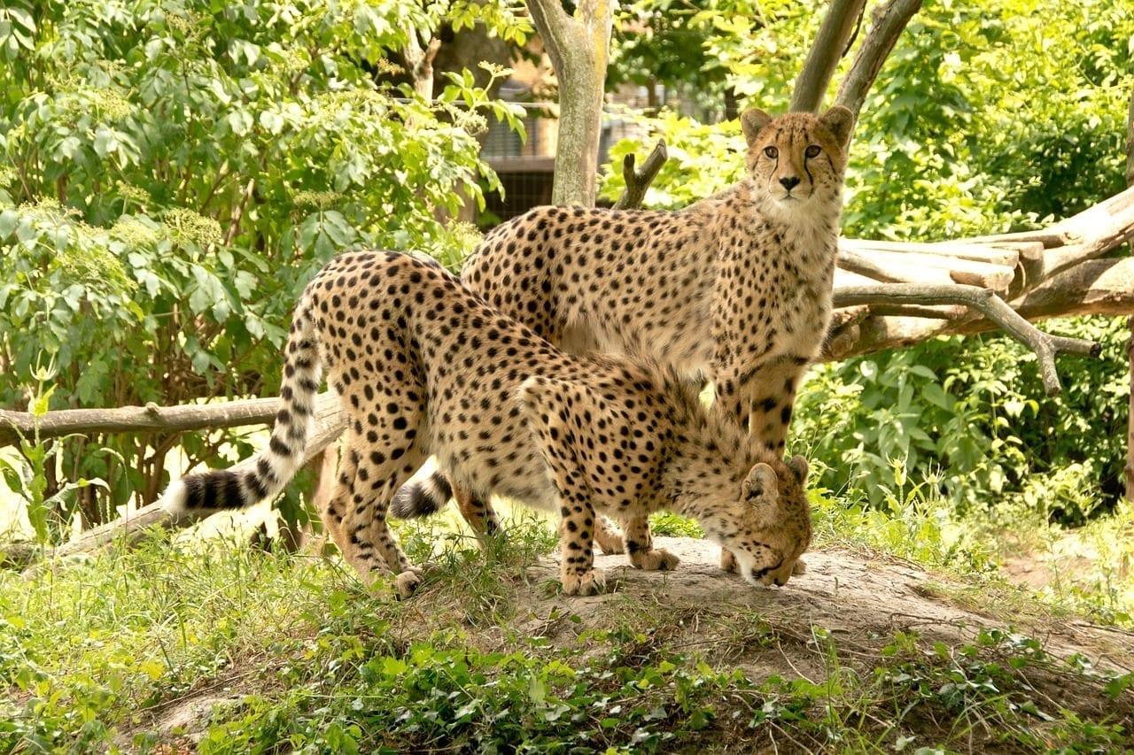 áfrica Kenia Safari