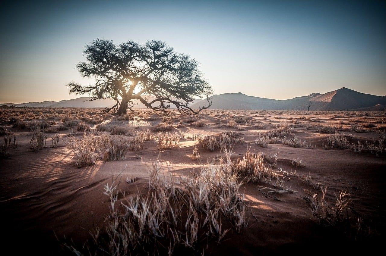 áfrica Namibia Safari