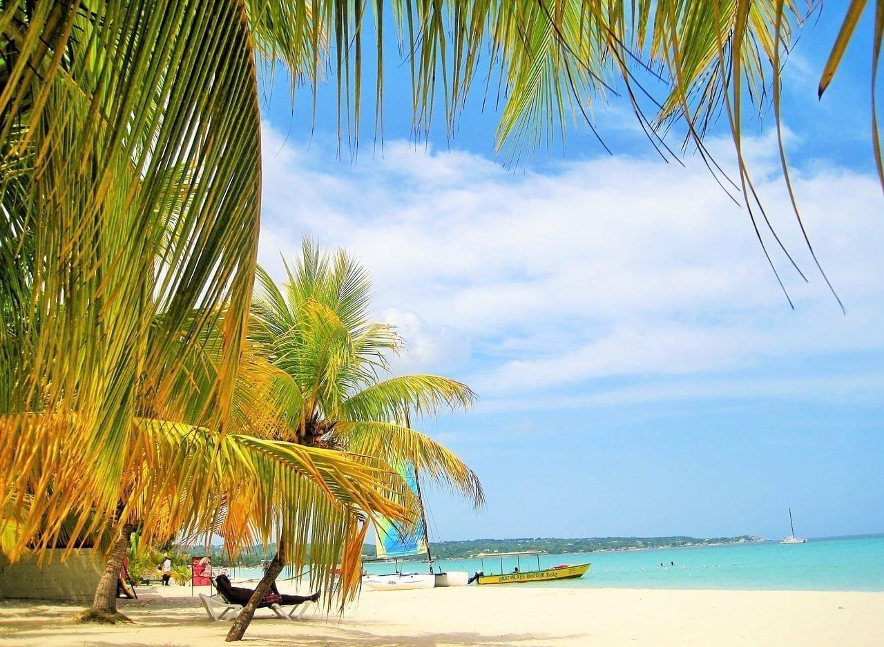 Hermosa Jamaica Palmeras