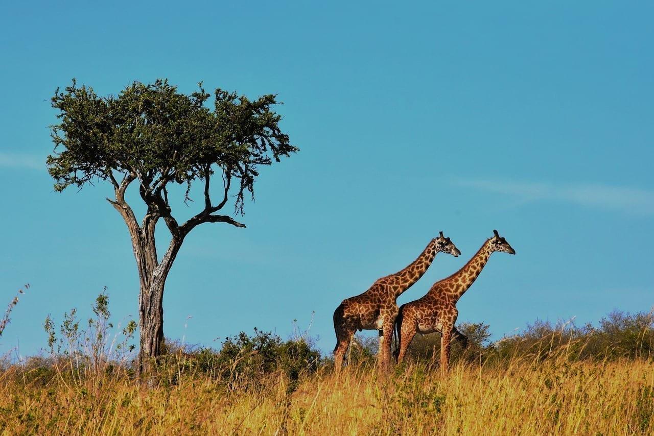La Vida Silvestre áfrica Tanzania