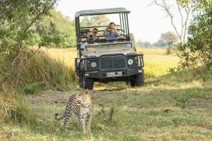 Leopardo áfrica Botswana