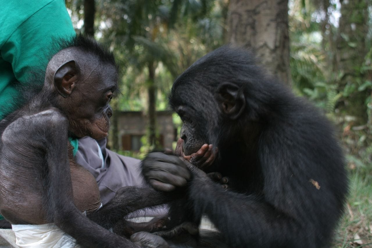 Lola ya Bonobo (