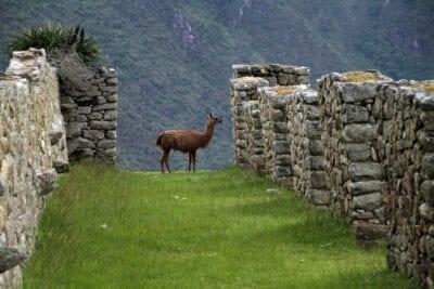 Machu Picchu Perú Inca