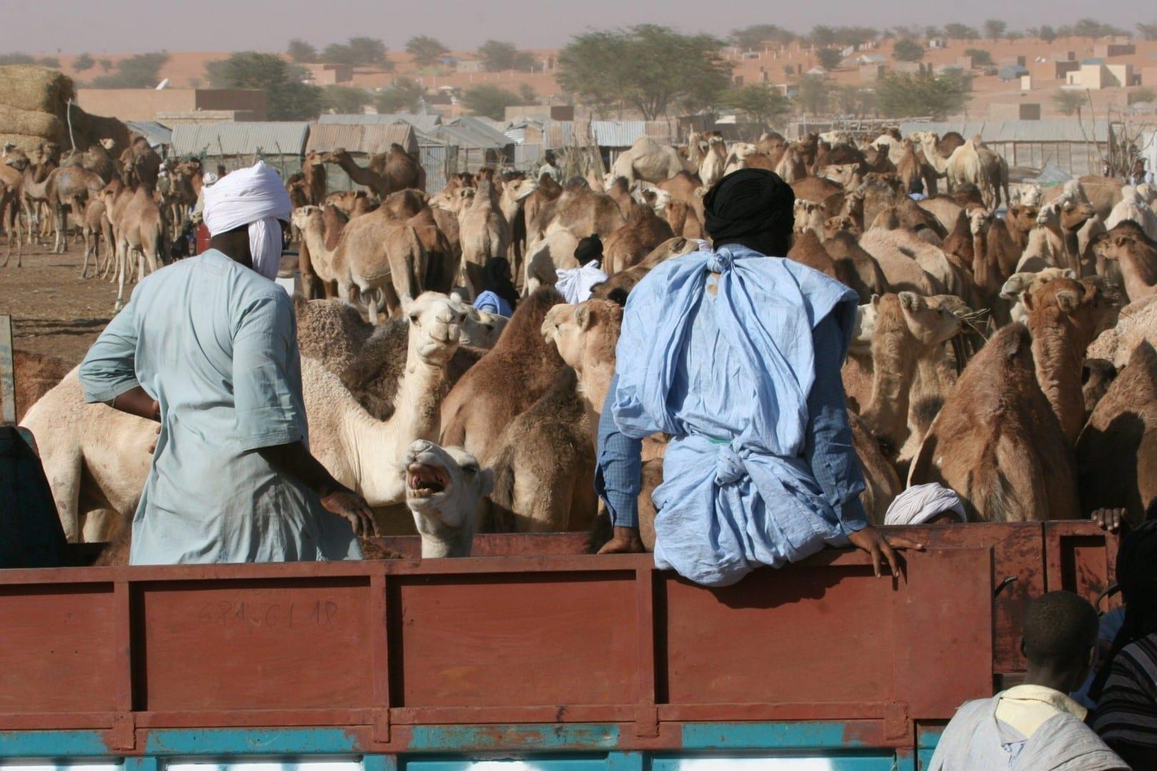 Mercado de Camellos Mauritania