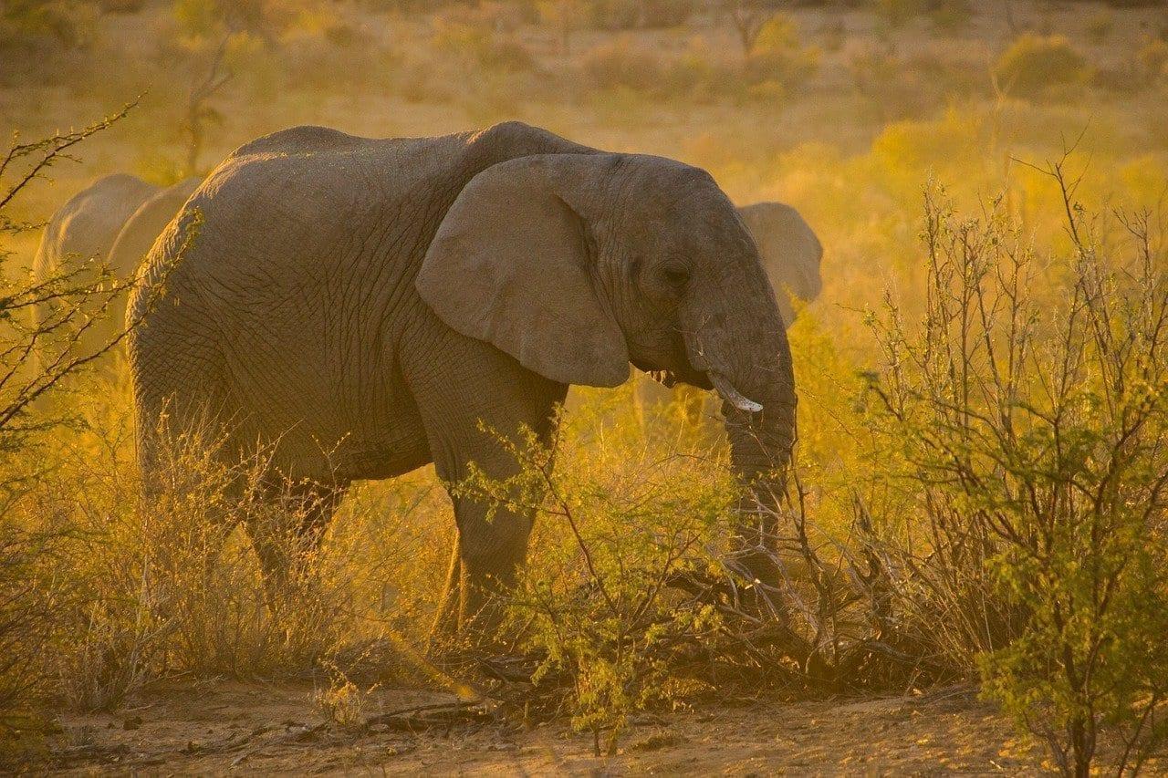 Namibia Puesta Del Sol Elefante