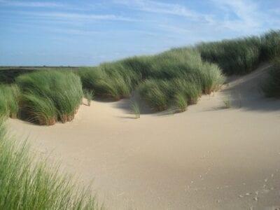Países Bajos Barrón Plantas