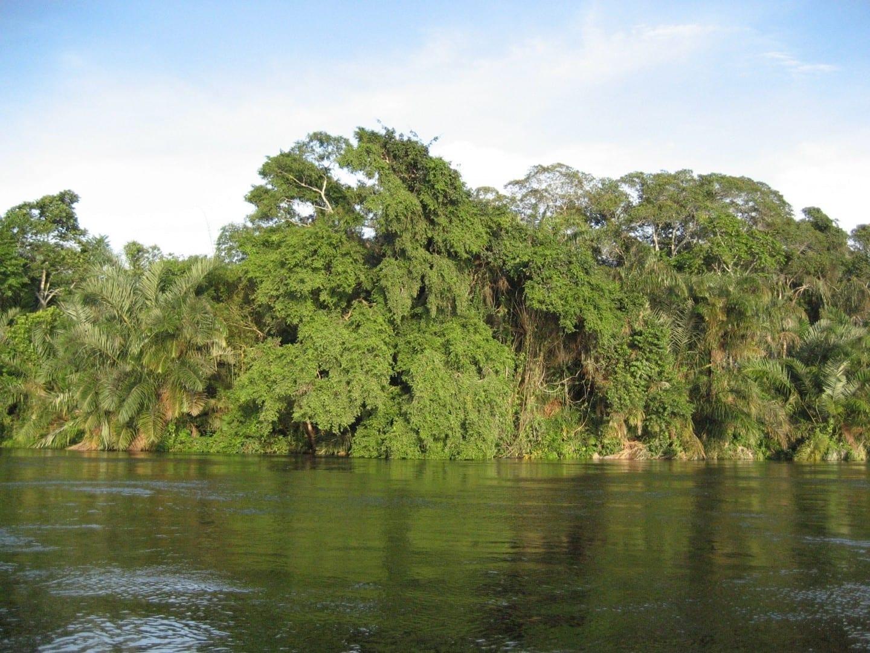 Paisaje en el río Alima, un afluente del río Congo Congo