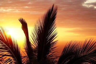 Palm Isla De La Reunión Puesta De Sol