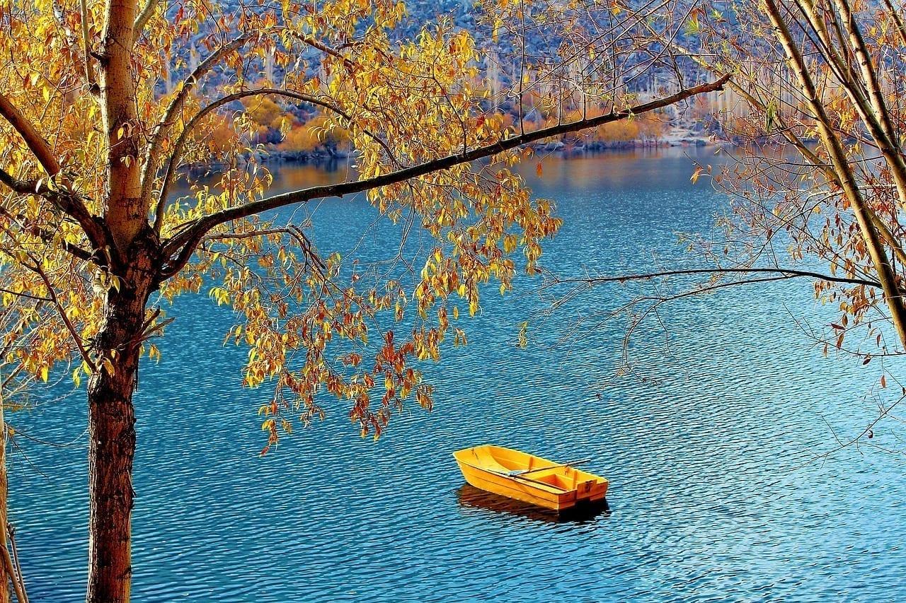 árbol Lago Pakistán