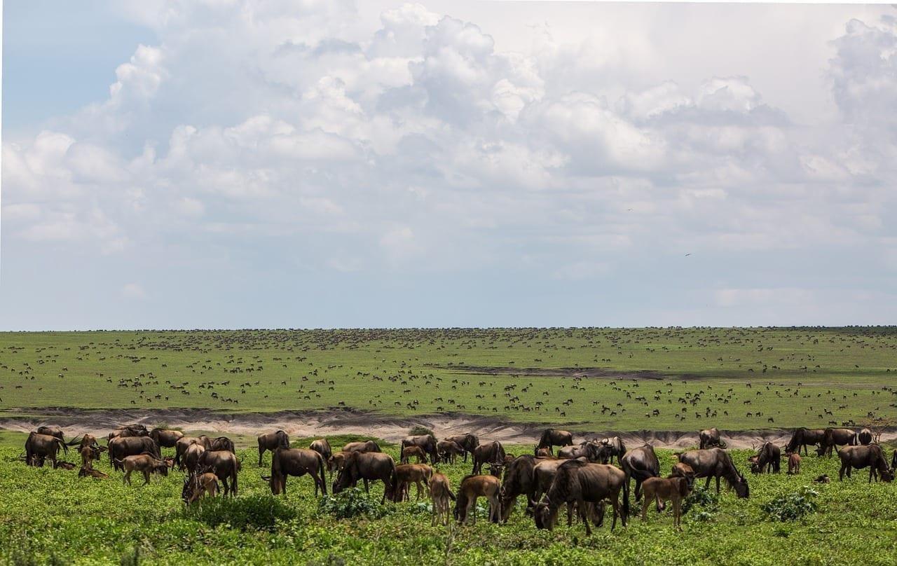 área De Conservación De Ngorongoro Fauna Tanzania