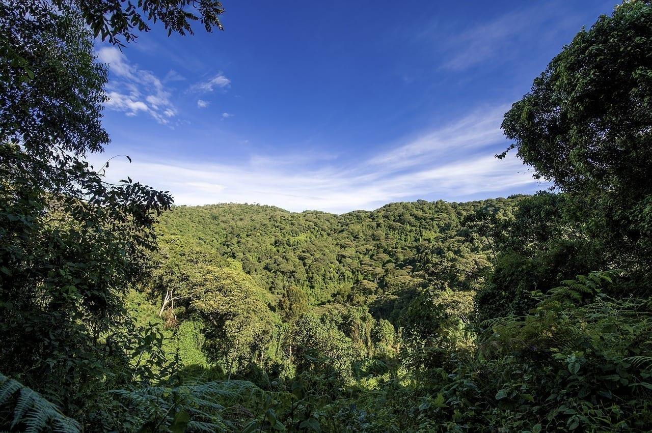 Uganda Selva Forestales