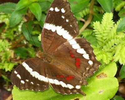 Alajuela Costa Rica