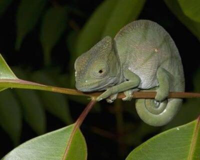 Andasibe Madagascar