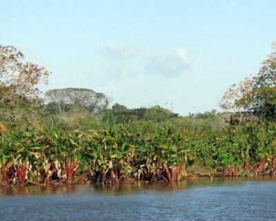 Caño Negro Costa Rica