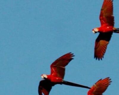 Carate Costa Rica