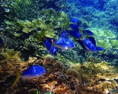 Chale Island Kenia