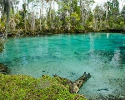 Crystal River FL Estados Unidos