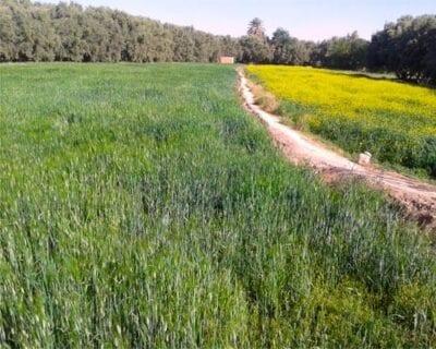 Er-rachidia Marruecos