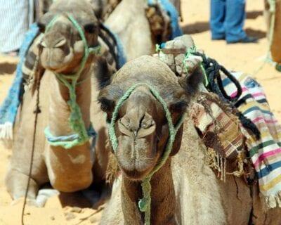 Gabés Túnez