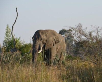 Ghanzi Botswana