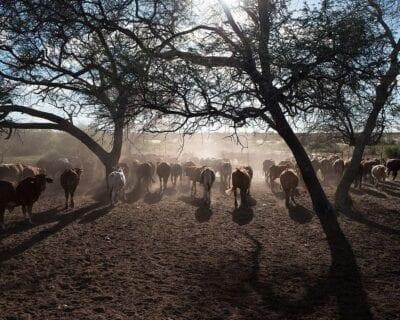 Gobabis Namibia