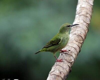 Guapiles Costa Rica