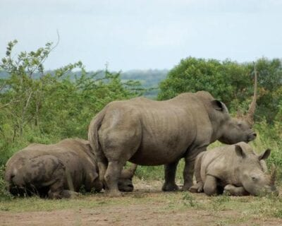 Hluhluwe National Park República de Sudáfrica