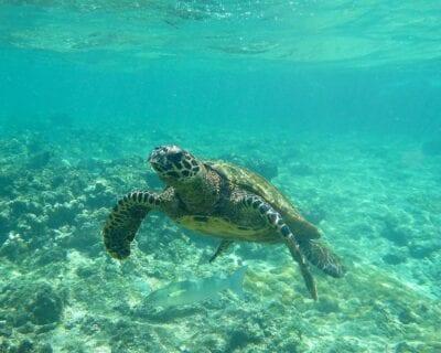 Isla Félicité Seychelles