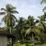 Katunayake Sri Lanka