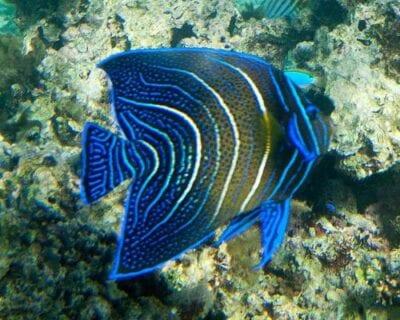 Levuka Fiyi