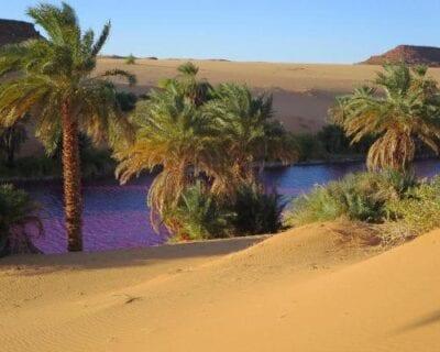 Liwa Emiratos Árabes Unidos