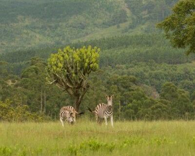 Lobamba Suazilandia