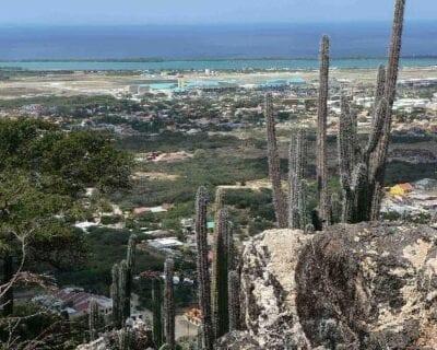 Paradera Aruba