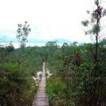 parque nacional de Bako Malasia